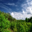 Forest on the hills in Latvia. Wide view. — Stock Photo #32832439