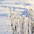 Hoar-frost in winter — Stock Photo #32832493