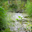 Forest swamp close-up view — Stock Photo