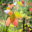 Autumn leaves close-up in the forest — Stock Photo