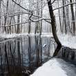 rzeka foresr w zimie — Zdjęcie stockowe