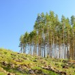 Forest landscape — Stock Photo #32833159