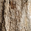 Wooden cork. Tree bark texture. — Stock Photo