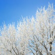 Hoar-frost on trees in winter — Stockfoto