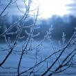 Stock Photo: Frost on tree at lake shore at sunrise