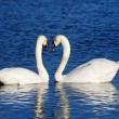 A couple of swans simbolizing heart sign — Zdjęcie stockowe
