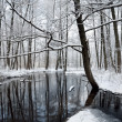 Foresr river in winter — Photo