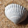 Stock Photo: Sea snail shell on the sand