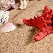 Sea star and shells on the sandy beach — Stock Photo