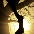 Close-up of a tree in the fog with sunbeams — Stock Photo #32834695