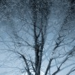 Close-up of a tree in the fog with sunbeams — Stock Photo