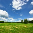 Classic rural landscape. Green field against blue sky — Stock Photo