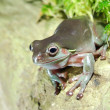 Colorful green frog sitting in terrarium — Stock Photo
