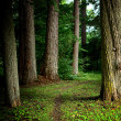 Stockfoto: Dark forest
