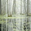 Swamp in fog at the sunrise — Stock Photo