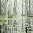 Stock Photo: Swamp in fog at the sunrise