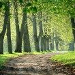 Road in the morning forest — Stock Photo