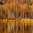 Autumn river landscape with reflection — Stock Photo