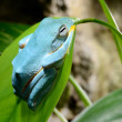 Colorful frog in terrarium — Stock Photo