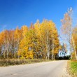 Country road in fall season. Latvia — Stockfoto