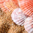 Sea shells on the sandy beach — Stock Photo
