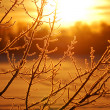 Frost on tree at the lake shore at the sunrise — Stock Photo