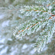 Pine tree covered with frost close-up — Zdjęcie stockowe