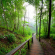 Staiway in forest disappearing in fog — Stock Photo