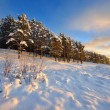 Winter forest at the sunset — Stock Photo