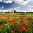 A poppy field and a country house in Latvia — Stock Photo #32837333