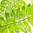 Stock Photo: Green tropical plants close-up
