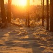 Falling snow in winter forest at the sunset — Stock Photo