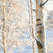 Winter forest view — Foto de Stock