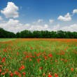 A poppy field in bright sunny day. Krasnodar, Russia — Stock Photo #32838553