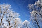 Sneeuw op bomen in de winter. Tallinn stad — Stockfoto