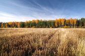 Cereal field in fall season. Latvia — Stock Photo