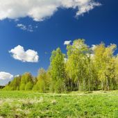 Classical meadow and forest spring landscape — Stock Photo