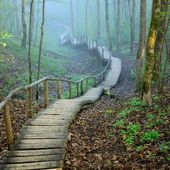 Staiway in forest disappearing in strong fog — Stock Photo