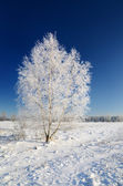 Winter countryside view — Stock Photo