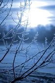 Мороз на дерево на берегу озеро на рассвете — Стоковое фото
