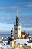 город таллинн. эстония. снега на деревьях зимой — Стоковое фото