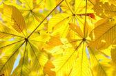 Autumn leaves close-up — Stock Photo