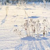 Hoar-frost in winter — Stock Photo