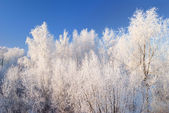 Winter landscape with snoe covered trees against blue sky — Stock Photo