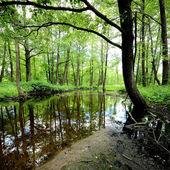Forest river scene — Stock Photo