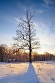 Winter countyside view — Stock Photo
