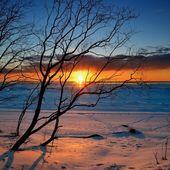 Silueta de árbol contra colorido atardecer en la costa del mar báltico nevado — Foto de Stock