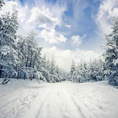 Winter scene: road and forest with hoar-frost on trees — Stok fotoğraf