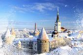 Tallinn city. Estonia. Snow on trees in winter — Stock Photo