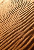 Desert dunes close-up — Stock Photo